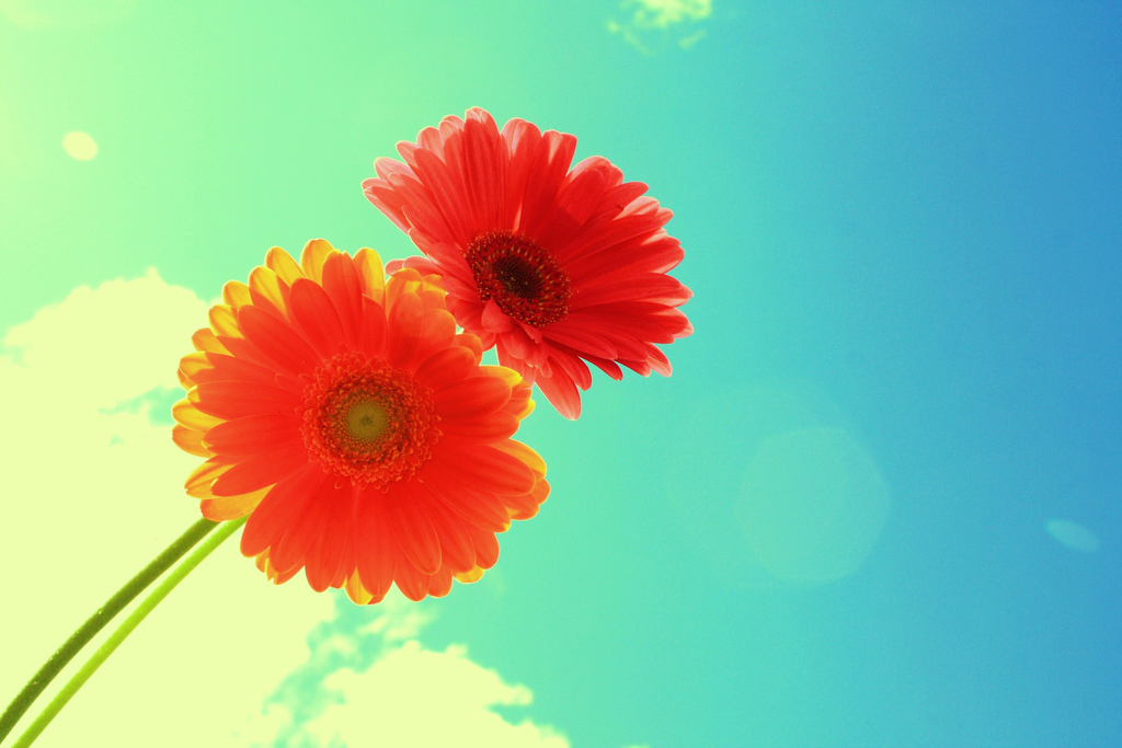 Two Bright Flowers On Blue Sky