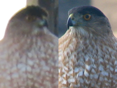 image of an eagle photo quality comparison